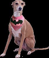 Batman - Batgirl Bandana Dog Collar (M)